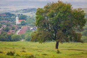 transilvania ialoc